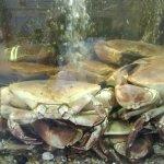crabs in tank in restaurant