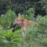 Photo of Hainan Tropical Wildlife Park and Botanical Garden