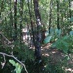 Tente berbère  Forêt des farfadets