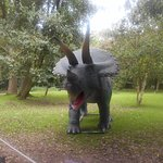 A triceratops