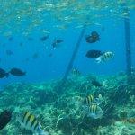 Photo of Resta Reef Resort