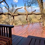 Mongooses on the main lodge deck