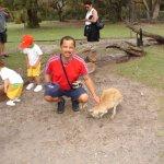 ....mingling with the kangaroos