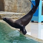 Foto de Ocean World Adventure Park