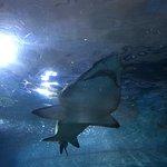 Aquarium Donostia-San Sebastian Foto