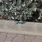 Cool little blue lizards that run around the island