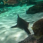 Photo de Ripley's Aquarium