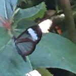 Photo of Mariposas de Mindo - Butterfly Garden