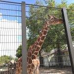 Foto de ARTIS Amsterdam Royal Zoo