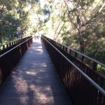 Walkway start of the tree top walk