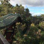 Glass bridge and tree top walk