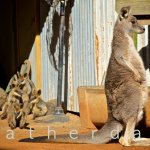 Featherdale Wildlife Park Foto