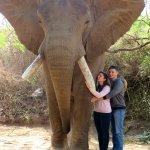 Photo of Elephant Whispers
