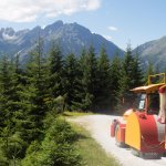 The land train through the forest