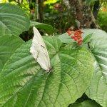 Photo de Butterfly World