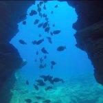 Photo de Fathom Five Divers