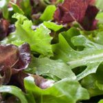 Mixed Greens should be fresh and clean.