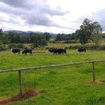 Photo of Smithfield Farm B&B