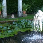 A lily pond fountain, I quite fancied a paddle!