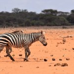 Photo of Tsavo East