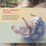 """Don't Worry, I'm ok!"" Tortoise exhibit"