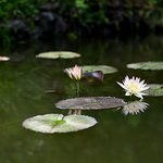 Photo of The Kochi Prefectural Makino Botanical Garden