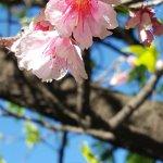 Foto di Japanese Garden