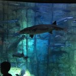 My grandkids kids loved the Denver Aquarium! They both wanted to go back the next day.