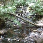 Ruisseau dans la Laurisylve
