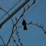 Hummingbird silhouetted against the caging.