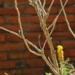 Hummingbird hiding behind a branch.