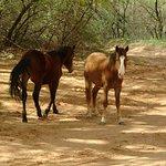 Navajo horses.