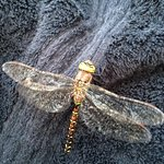 Dragonflies are very friendly there!