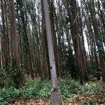 Grove of Trees in the Presidio