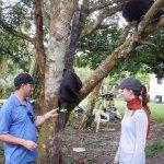 activities/howler monkeys