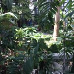 Photo de United States Botanic Garden