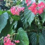 Flowers in Botanic Garden