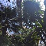 Botanic Garden interior