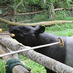 Photo of Khao Kheow Open Zoo
