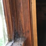 Big Cobweb full of dead flies.
