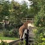 Photo of Parc Zoologique de Paris