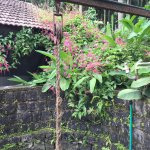 Photo de Kolavara Heritage Homestay