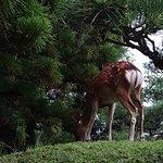 Foto de Nara Hotel