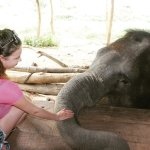 Photo of Elephant Village Pattaya