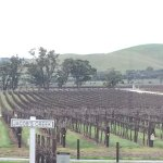 Views of the vineyard in the winter season