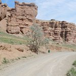 The only tree in a middle of Charyn canyon. There is have to be a bench not only trash bin!