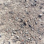 Try to find beetle on this picture from somewhere in Charyn canyon.