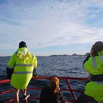 whale spotters