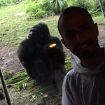 With a Gorilla