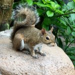 Many squirrels are just roaming around.
